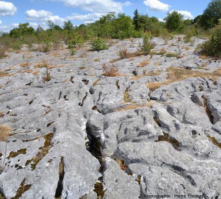 Vue d'un vaste secteur du lapiaz de Loulle (Jura)