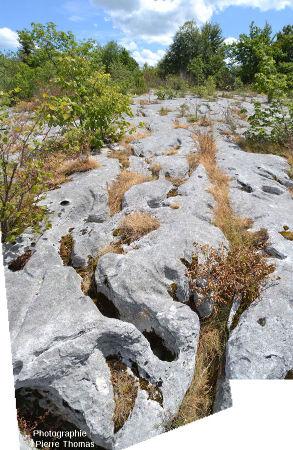 Vue d'un grand secteur du lapiaz de Loulle (Jura)