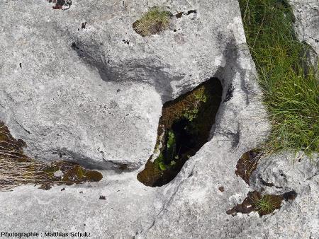 Gros plan sur des cavités et/ou des rigoles élargies semblant traverser le calcaire sur une grande épaisseur, lapiaz de Loulle (Jura) 3/5