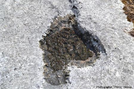 Gros plan sur une cavité pleine de «crachat du diable», lapiaz de Loulle (Jura)