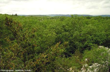 La chênaie du Bois de Païolive (Ardèche) vue du sommet d'un monticule de calcaire dolomitique