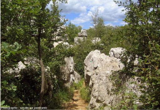 En cheminant dans le Bois de Païolive, entre monticules, chaos, pseudo-murs et pinacles