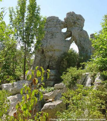 """Quand érosion et dissolution sculptent des pinacles dolomitiques mimant une rencontre entre """"l'ours et le lion"""" dans le Bois de Païolive"""