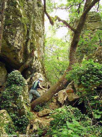 En parcourant des diaclases peu élargies, formant de véritables couloirs ou canyons dans le Bois de Païolive (Ardèche)