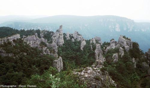 Méga-lapiaz sur calcaire dolomitique du Jurassique moyen, Montpellier le Vieux (Lozère)