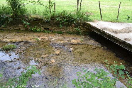 Concrétion stromatolithique émergeant du ruisseau du Dard (juste à gauche du pont) et commençant à être colonisée par des herbes