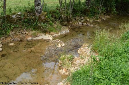 Zone avec une concrétion stromatolithique émergeant du ruisseau du Dard et commençant à être colonisée par de l'herbe