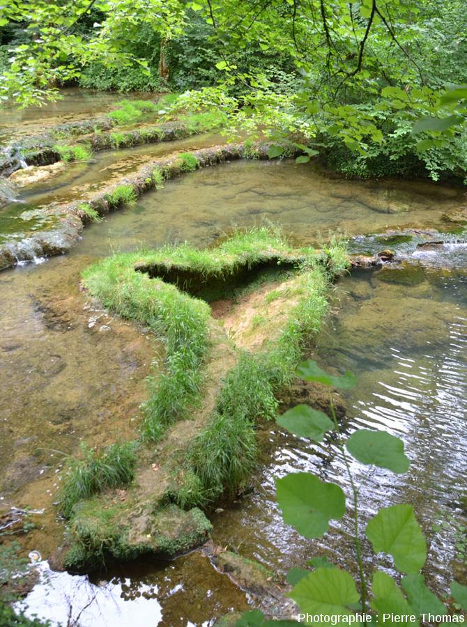 Barrages de travertin émergeant franchement pendant les périodes de basses eaux et se couverts d'herbes, cours amont du Dard, Reculée de Baume-les-Messieurs (Jura)