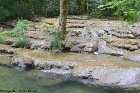 Zoom sur le pied de l'arbre central de la figure précédente, sur un barrage de travertin, aval de la Cascade du Dard (Jura)