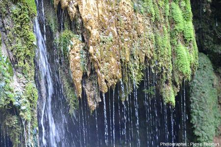 Détail sur le côté Sud de la cascade de Baume-les-Messieurs