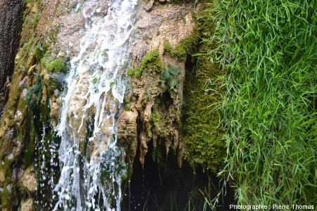 Détail du côté Sud-Est de la cascade de Baume-les-Messieurs