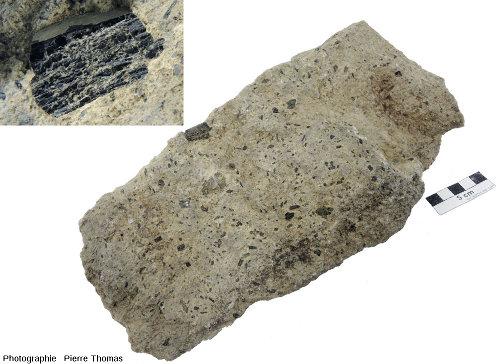 Bloc d'andésite caractéristique de ce qu'on peut trouver en arpentant la couche de conglomérat volcano-sédimentaire du synclinal de Saint-Antonin (Alpes Maritimes)