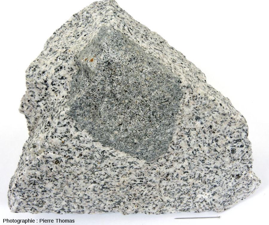 Diorite de Traversella, échantilon avec un faciès sombre (grains fins, riche en biotite et amphibole) en enclave dans un faciès clair (identique à l'échantillon précedent)