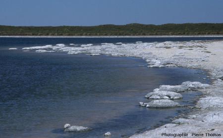 Vue globale sur la côte Sud du lac Thetis (Australie Occidentale) et ses stromatolithes