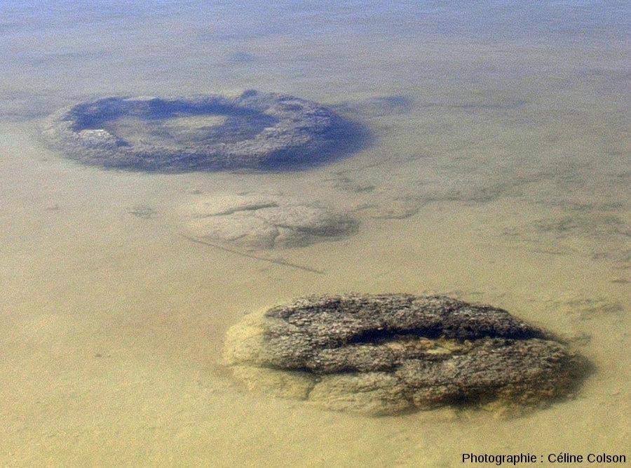 Vue de détail de coupoles stromatolithiques immergées pendant le mois de juillet 2004, période de hautes eaux du lac Thetis (Australie)