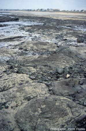 Coupoles stromatolithiques cambriennes visibles à marée basse sur l'estran de Barneville-Carteret et Saint-Jean-de-la-Rivière