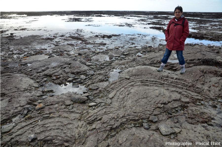 Divers aspects des coupoles stromatolithiques cambriennes de Barneville-Carteret et Saint-Jean-de-la-Rivière