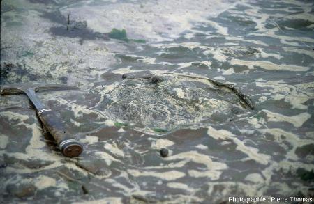 Vue sur un groupe de petits stromatolithes dépassant d'une couche silto-gréseuse érodée