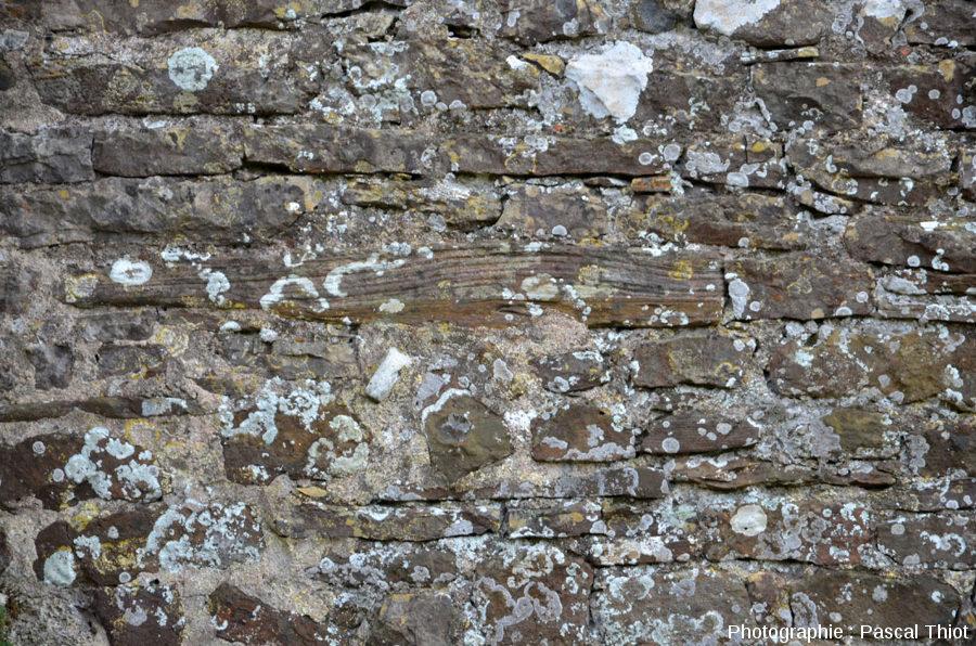 Coupe de stromatolithe dans les murs d'une maison de Barneville-Carteret
