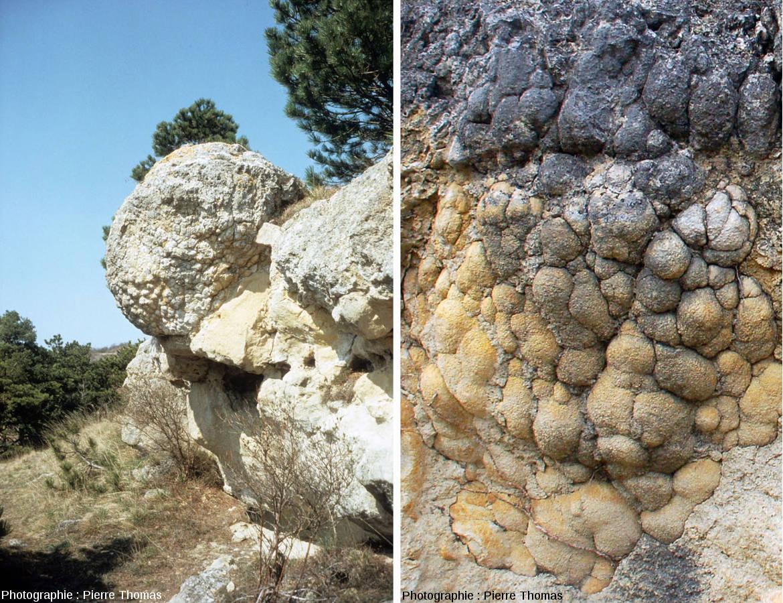 Vue d'ensemble d'une boule stromatolithique et détail de sa surface