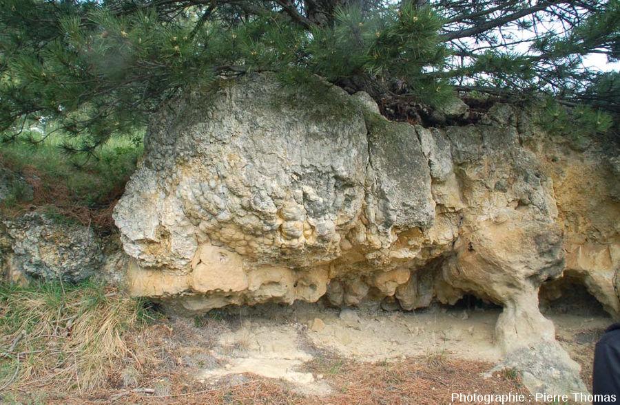 L'une des centaines de boules stromatolithiques de Jussat et sa surface mamelonnées