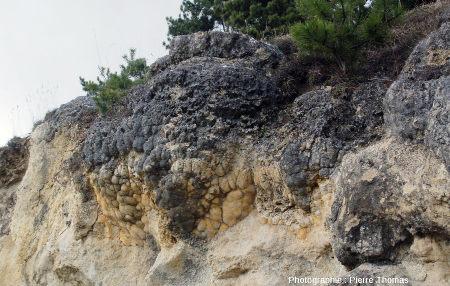 D'autres boules de la couche principale: une grosse boule stromatolithique cernée de deux plus petites boules (Jussat)