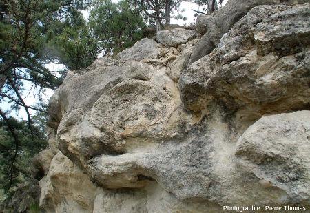 Coupe d'une boule stromatolithique (située 1 mètre sous le niveau principal visible en haut) permettant de voir la base d'une telle concrétion