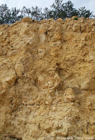Un stromatolithe à structure interne en couches concentriques, carrière du Mont Libre (Gannat, Allier)