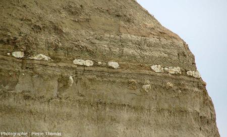 Détail d'un niveau riche en concrétions stromatolithiques de petite taille au sein des alternances argilo-marneuses