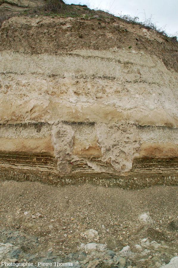 Vue d'ensemble sur deux stromatolithes en forme de colonnes