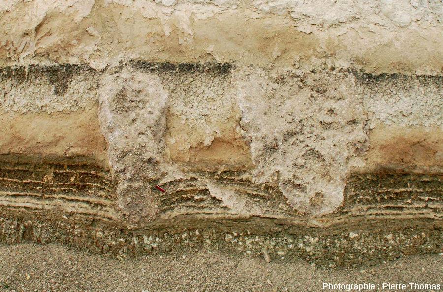 Zoom sur un ensemble de deux stromatolithes en forme de colonnes