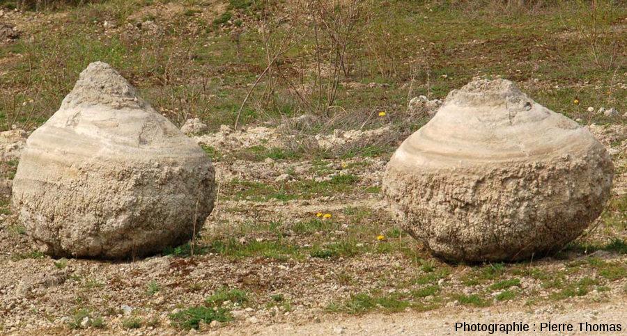 Exemple de stromatolithes dégagés et déposés sur le bord d'une piste d'exploitation de la carrière de Gondailly afin de matérialiser les bords de la piste