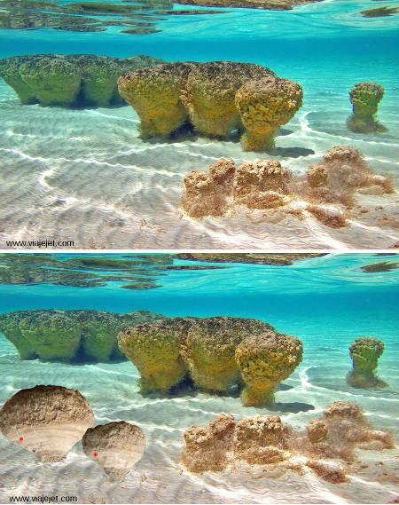 Comparaison entre des stromatolithes vivant dans l'eau (Shark Bay, Australie) et des stromatolithes fossiles d'Auvergne