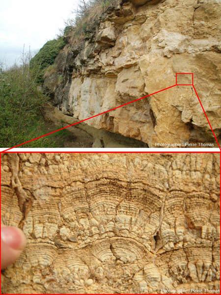 Vue d'ensemble et de détail sur une couche de stromatolithes tabulaires, Chadrat, commune de Saint Saturnin (Puy de Dôme)