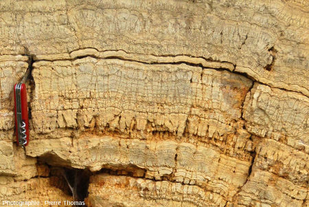 """Détail des """"cônes"""" stromatolithiques de ce secteur de la falaise de Chadrat"""