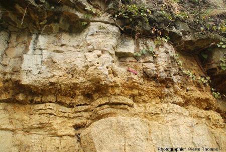 Couche de tempestite de roseaux stromatolithisés couchés, falaise de Chadrat, commune de Saint Saturnin (Puy de Dôme)