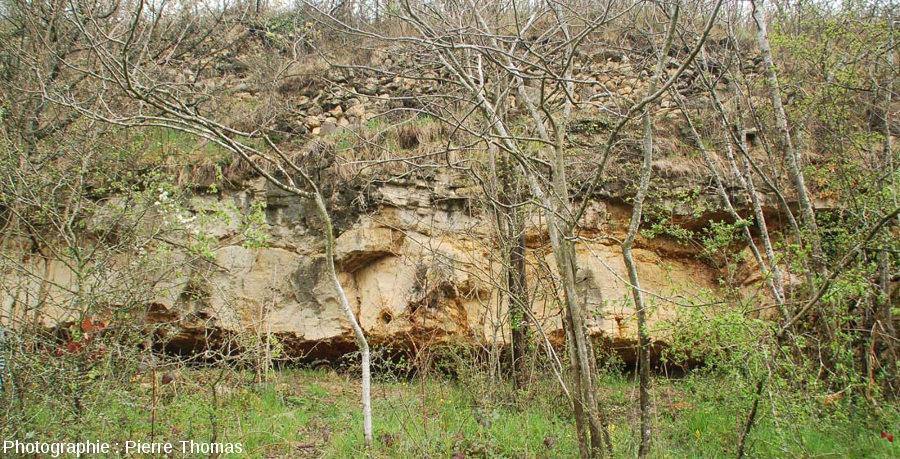 Secteur de la falaise de Chadrat avec un tronc stromatolithisé