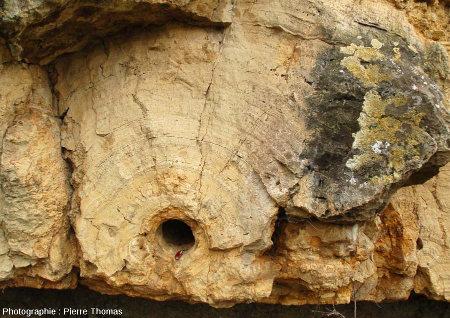 Zoom sur un tronc stromatolithisé, falaise de Chadrat