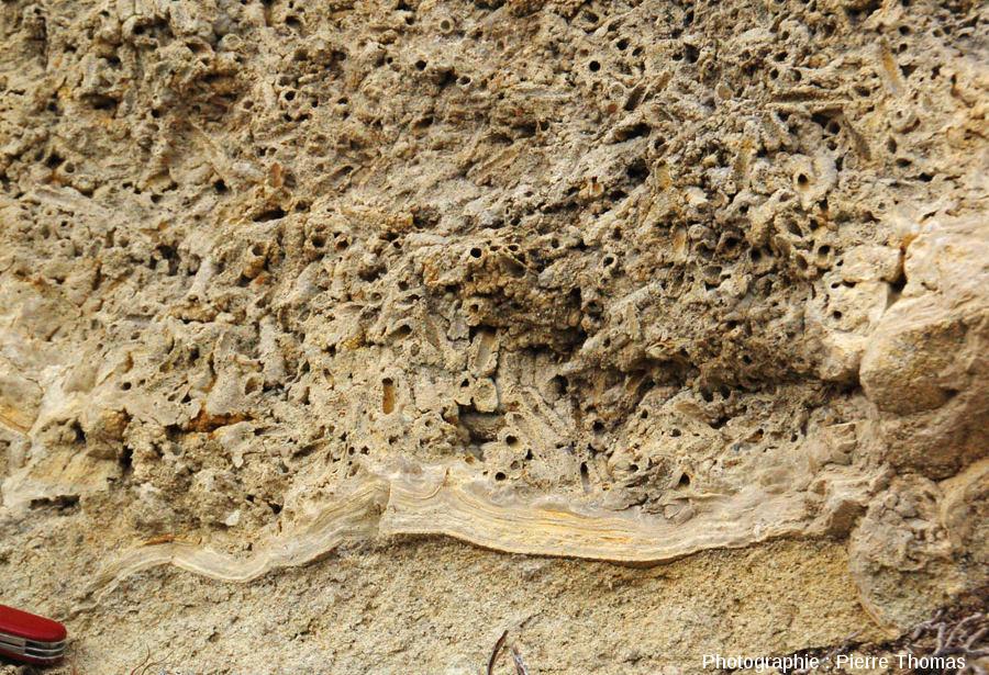 Énorme concentration de fourreaux de phrygane au cœur de la boule stromatolithique de la figure précédente (Jussat, Puy de Dôme)