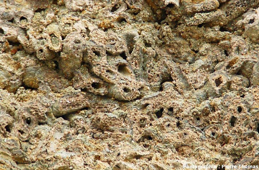 L'intérieur d'une boule stromatolithique à phryganes, Gondailly (Allier)