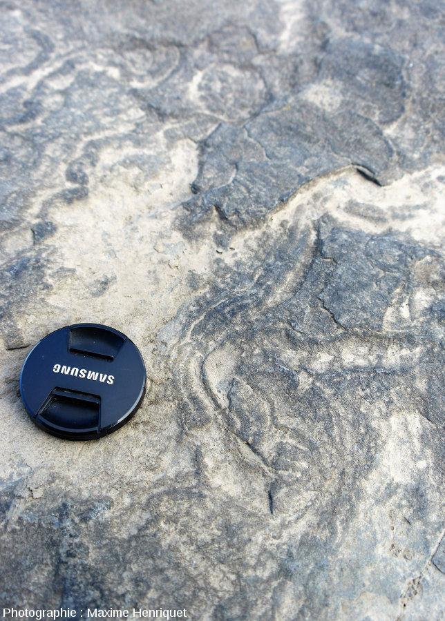 Zoom sur des traces fossiles dans cette dalle sommitale des falaises de Moher (Irlande)