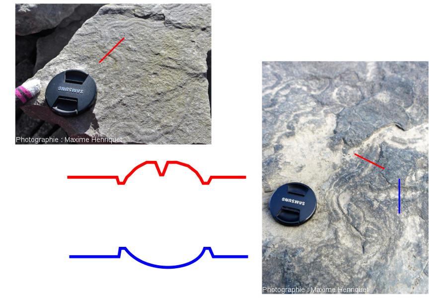 Coupes de deux types de traces rencontrées