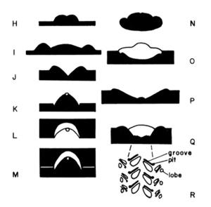 """Exemple d'ichnofossiles """"horizontaux"""" vus en coupe transversale"""
