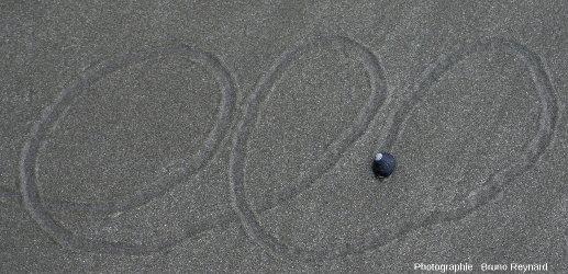 """Bigorneau """"calligraphe"""" sur une plage de la côte pacifique de la péninsule de Vizcaino, Basse Califorie du Sud, Mexique, une analogie actuelle avec les bilobites carbonifères irlandaises"""