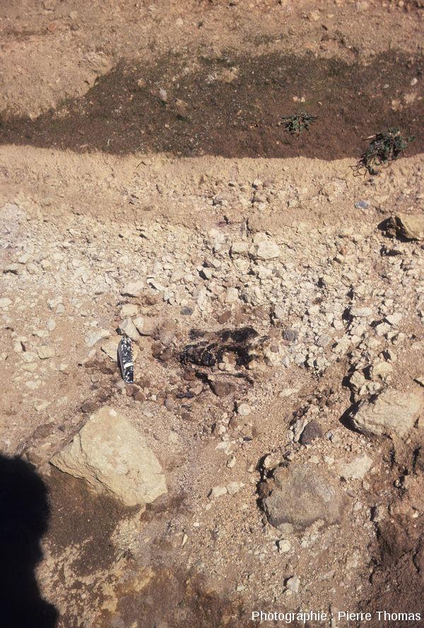 Vue sur un fragment de charbon de bois situé vers la base de ce recouvrement trachytique, Puy de Lemptégy