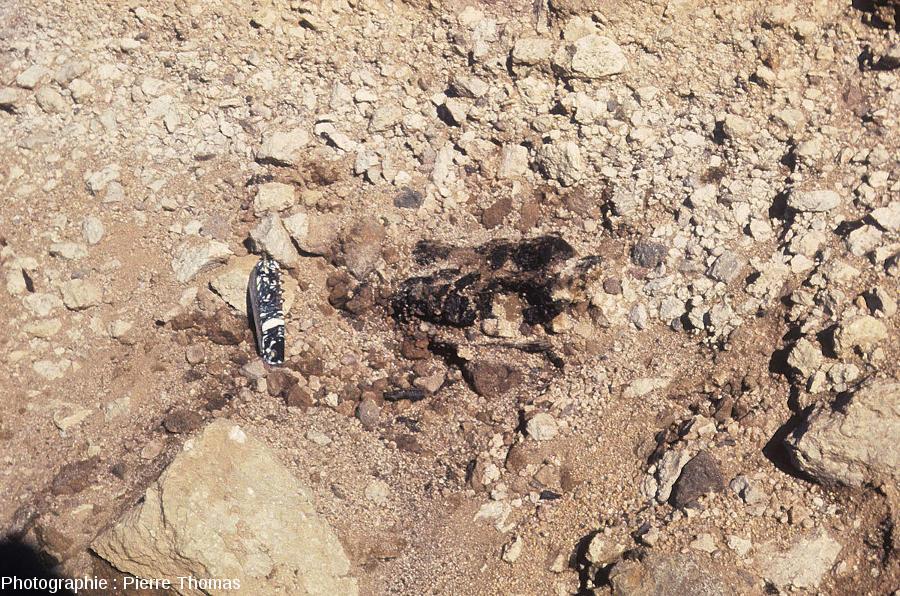 Zoom sur un fragment de charbon de bois situé vers la base de ce recouvrement trachytique, Puy de Lemptégy