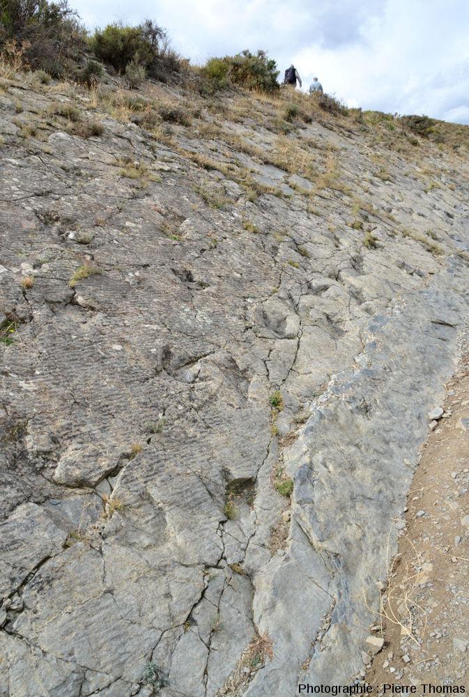 Piste de dinosaure théropode et ripple-marks sur un calcaire marneux du Crétacé inférieur (Aptien, -120Ma) de La Rioja, Espagne