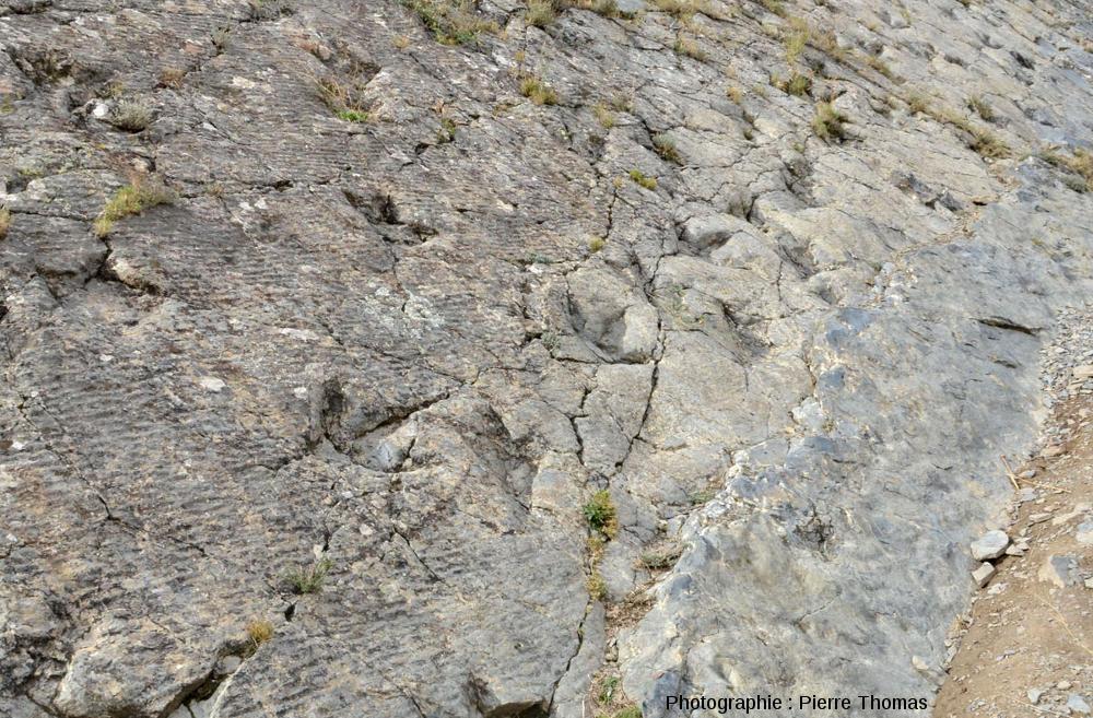 Zoom sur la partie amont de la piste de dinosaure théropode de la figure précédente, La Rioja (Espagne)