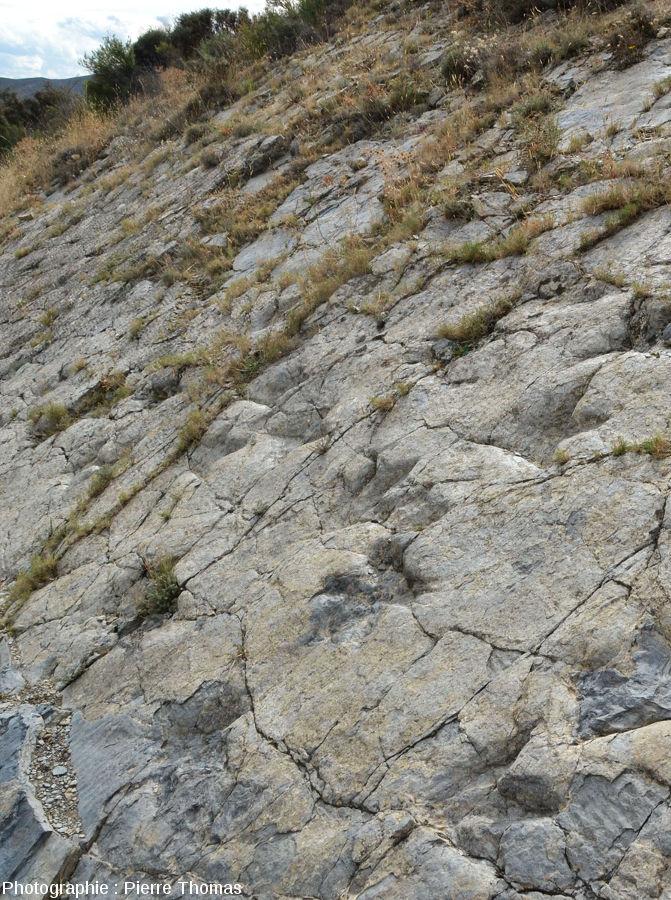 Piste de dinosaure sur le premier site, La Rioja (Espagne)