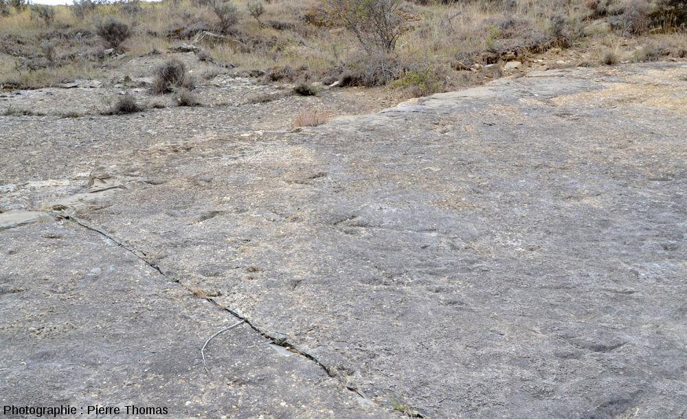 Zoom sur cette dalle à pistes de théropode, La Rioja (Espagne)